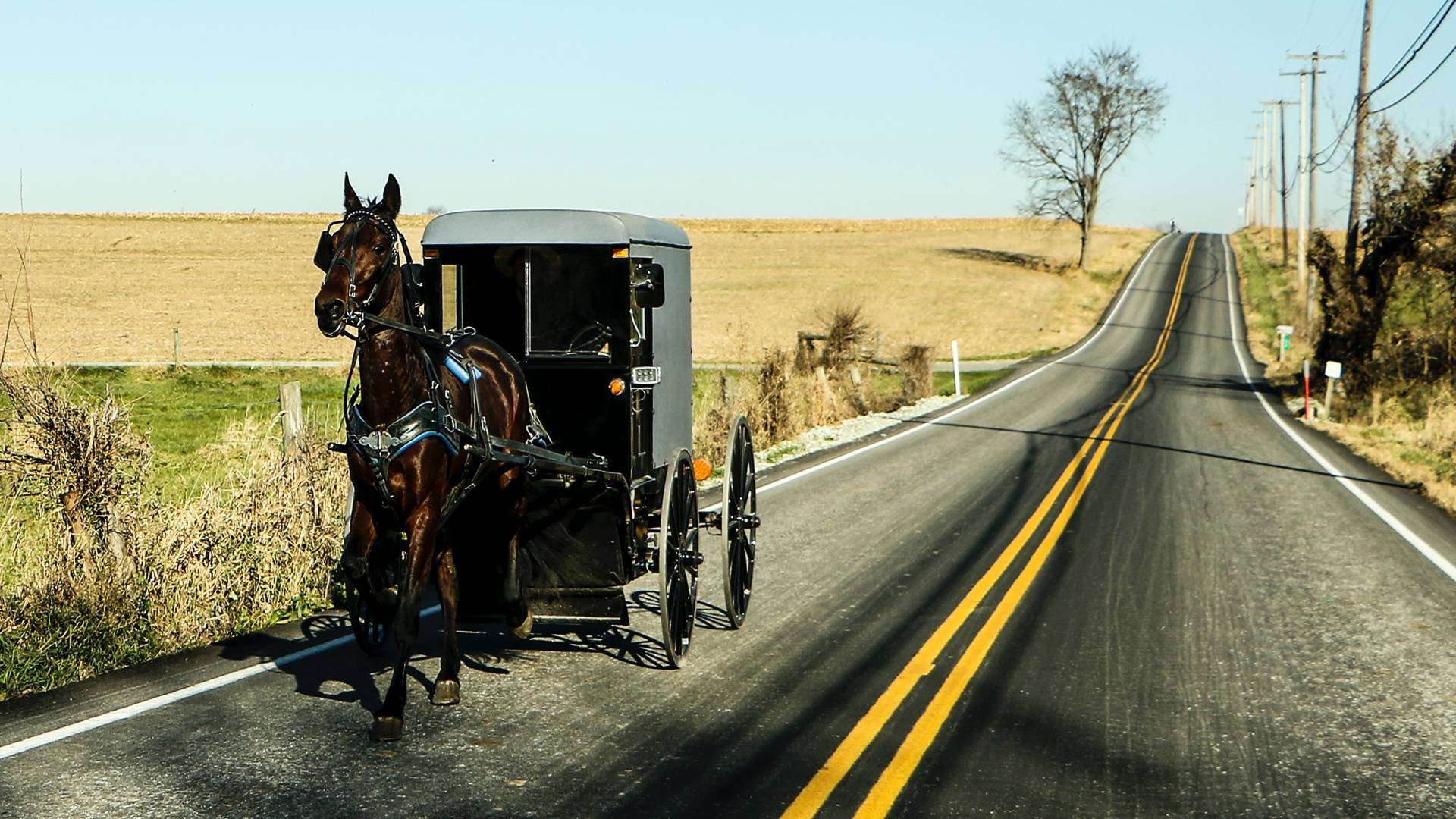 Amish buggy going down a road in Lancaster County, PA
