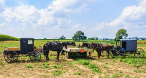 Amish buggies in a field around a cart