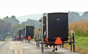 caravan of amish buggies going down a Lancaster, PA road
