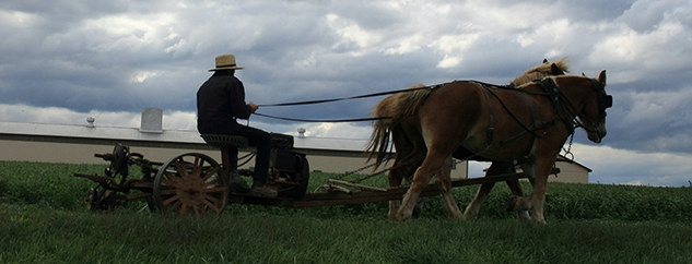 Amish plowing